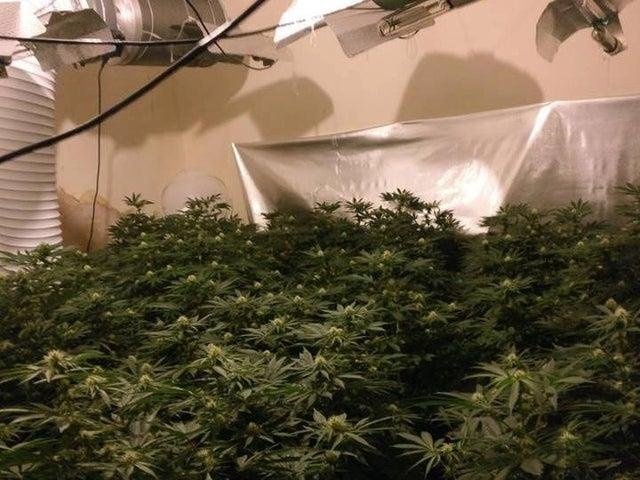 An image of a cannabis grow supplied by Nottinghamshire Police.