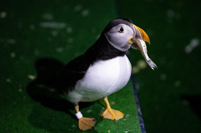 Hall Park residents paid a virtual visit to the Sea Life Trust puffin rescue centre