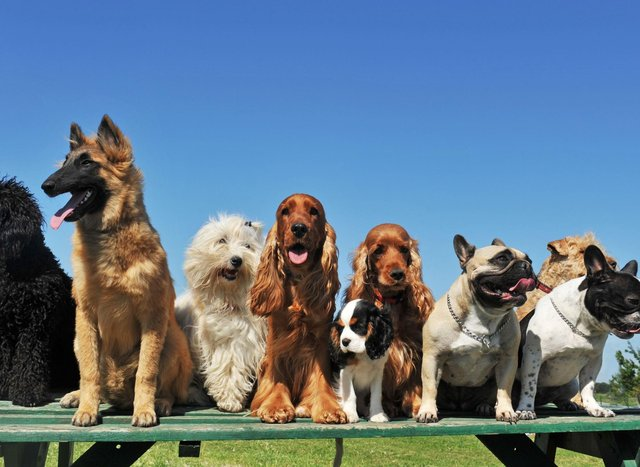 These are the most popular dogs breeds according to the Kennel Club.